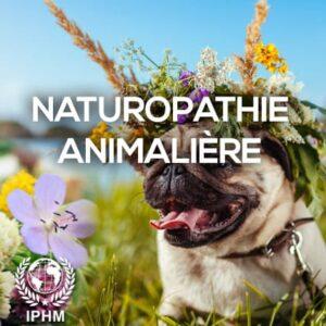 Formation en Naturopathie Animalière